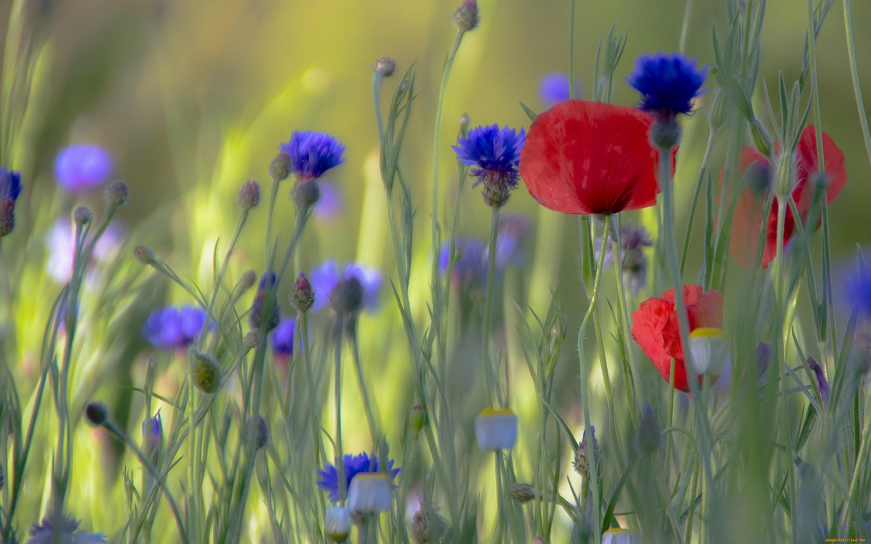 Фото рисунок полевые цветочки тогда